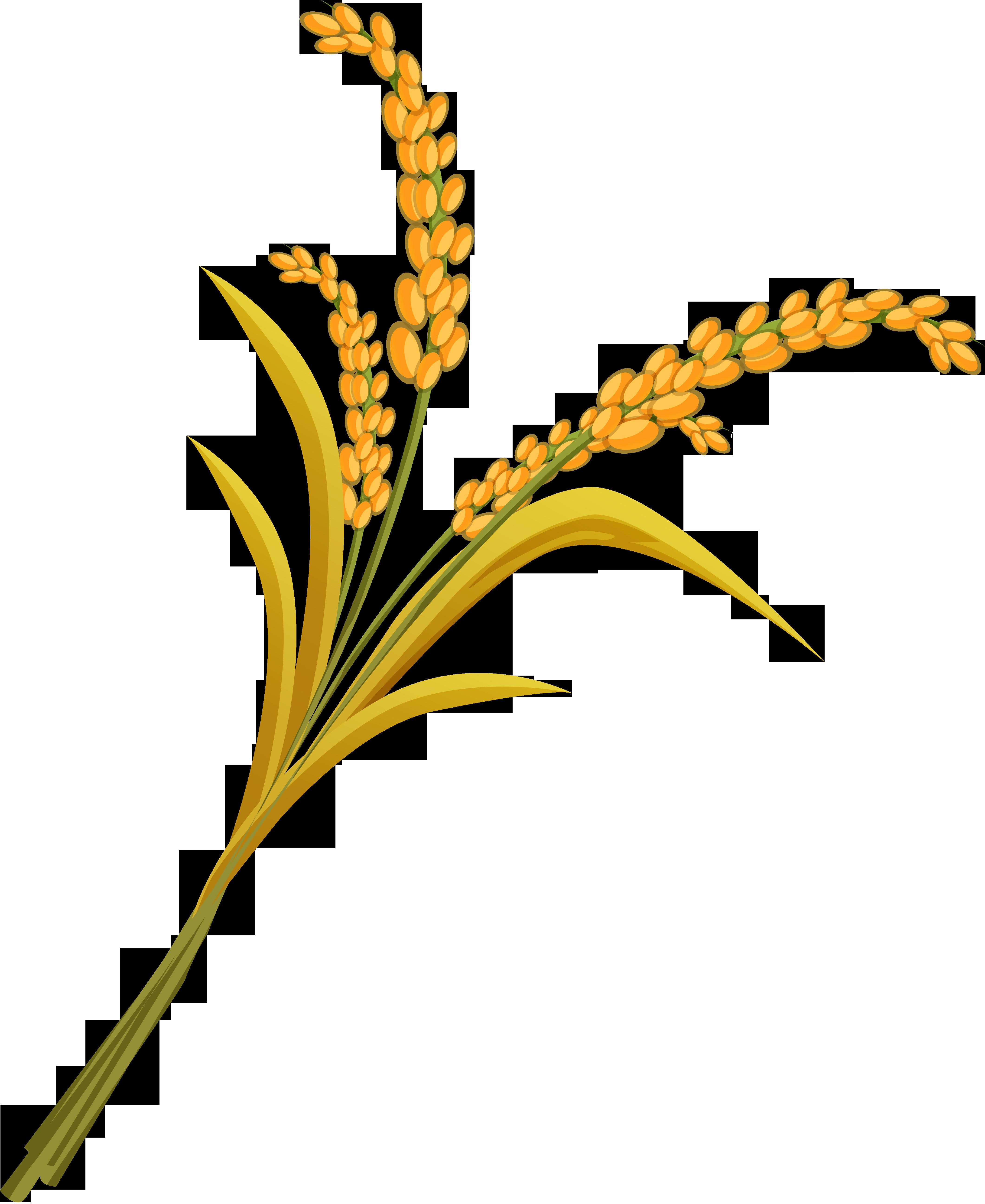 Wheat png image purepng. Grain clipart millet