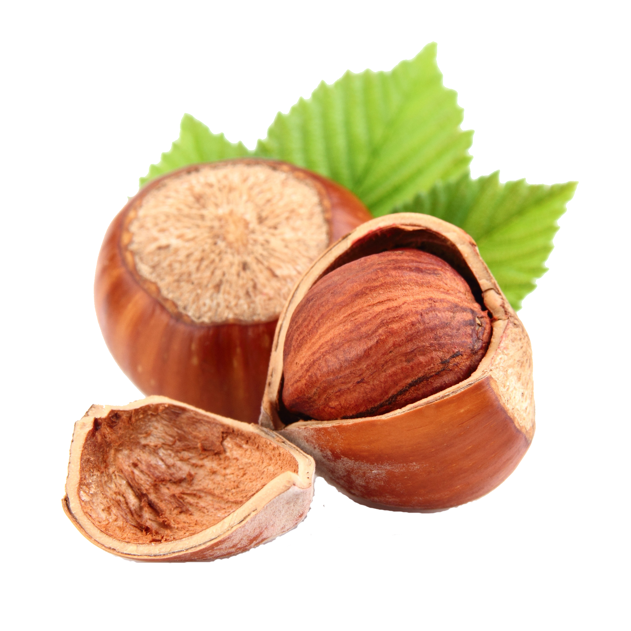 English golden nuts today. Nut clipart hazelnut