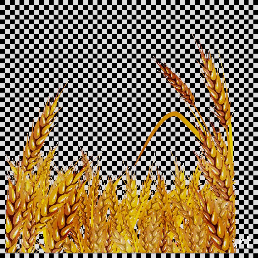 Hd oat clip art. Grain clipart oats