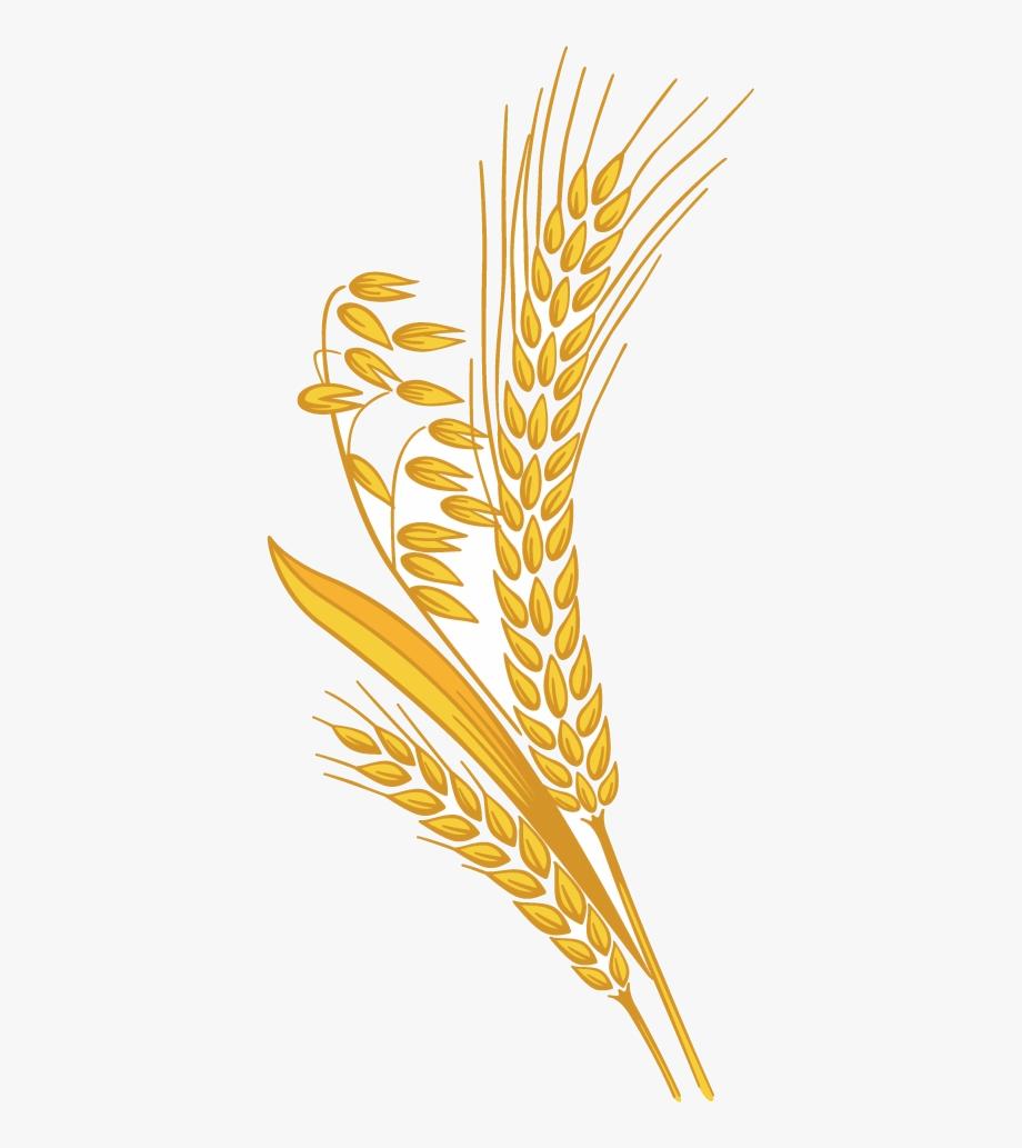Transparent grain png cartoon. Wheat clipart piece wheat