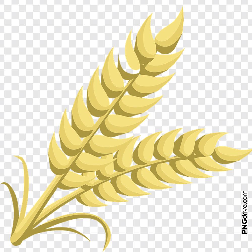 Png element vector image. Grain clipart piece wheat