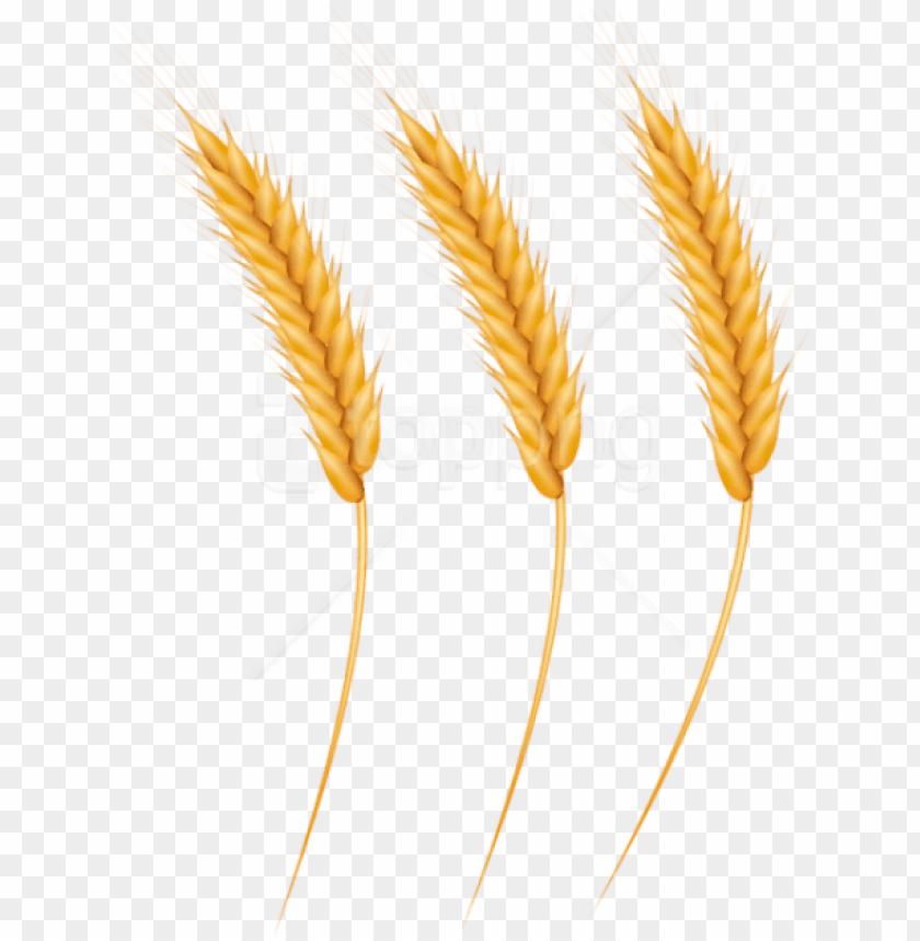 Grain clipart piece wheat. Free png download grains