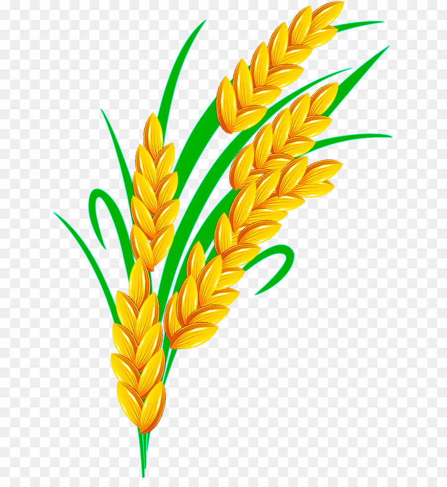 Png cereal download free. Wheat clipart rice grain