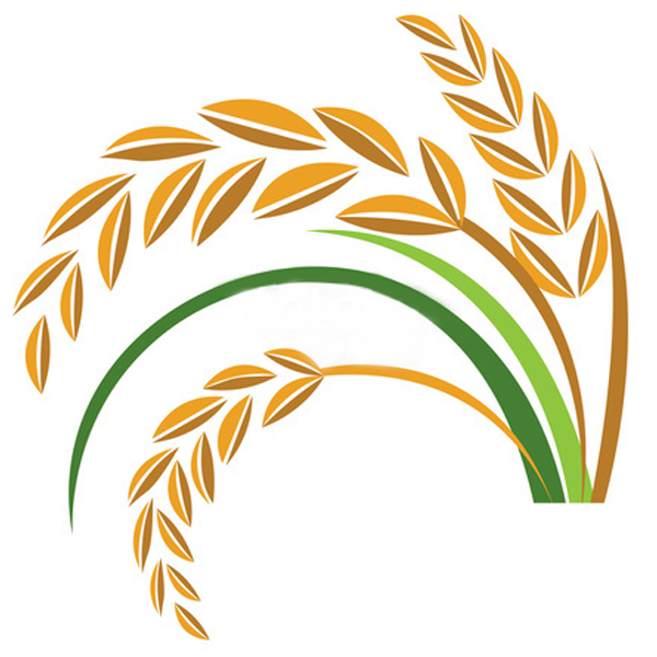 Grain clipart rice. Family tree background illustration