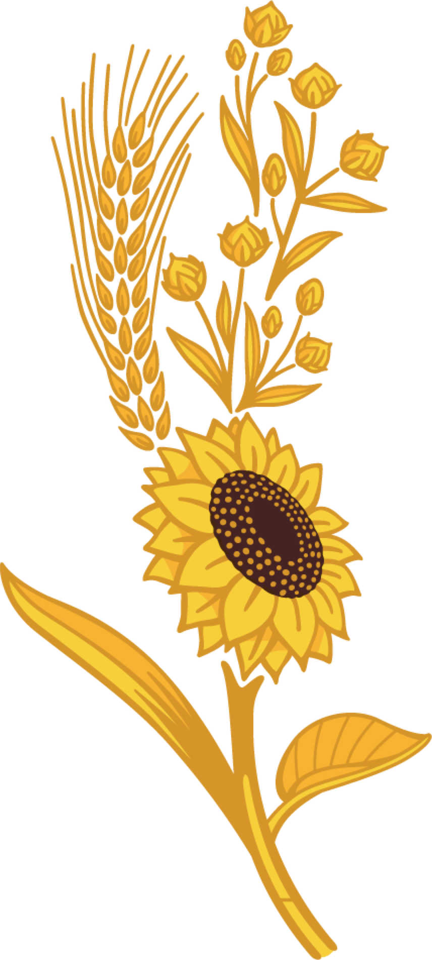 Harvest clipart sunflower. Seeds grains country