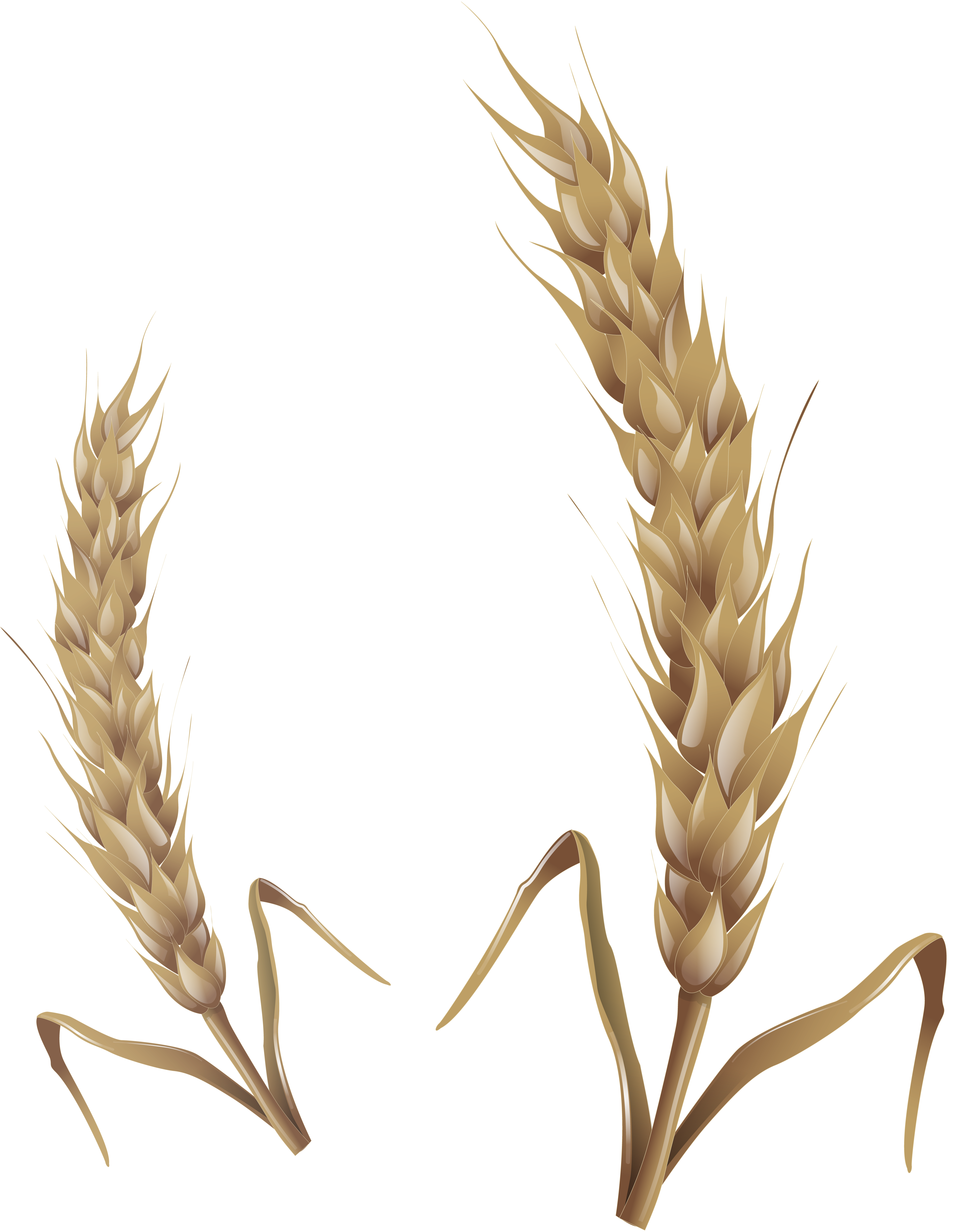 Wheat clipart rye. Png image purepng free