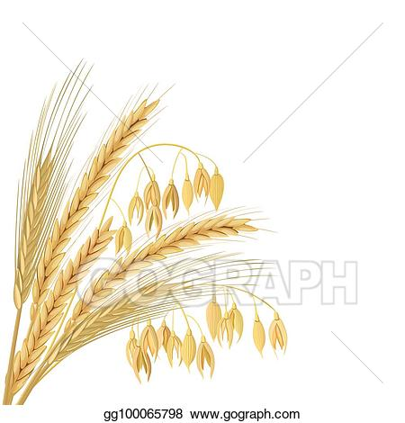 Eps illustration four cereals. Wheat clipart sheaf wheat