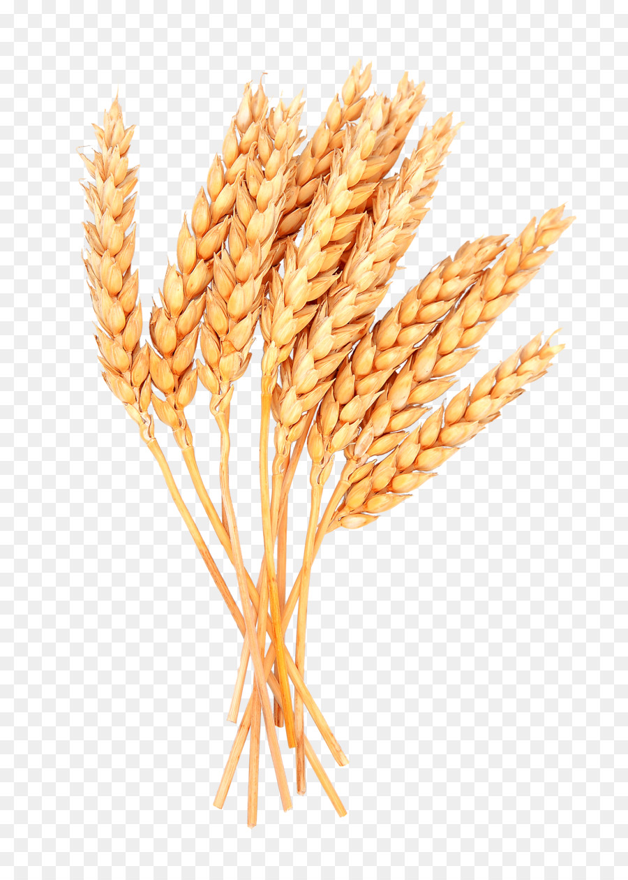 Wheat clipart sheaf wheat. Family drawing