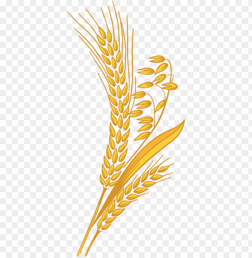 Wheat clipart high resolution. Grain png transparent library