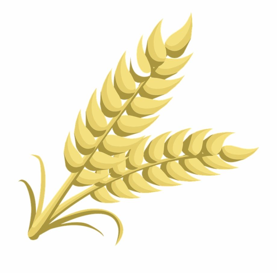 Grains clipart transparent. Circle png vector psd