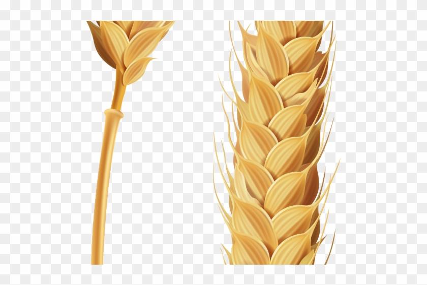 Grains clipart transparent background wheat. Stalk of grain