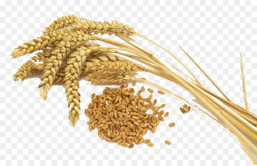 Wheat cartoon food clip. Grains clipart transparent