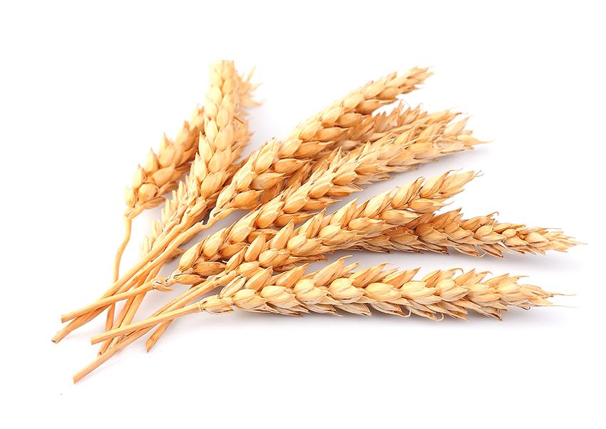 Wheat clipart grain bag. Png image purepng free