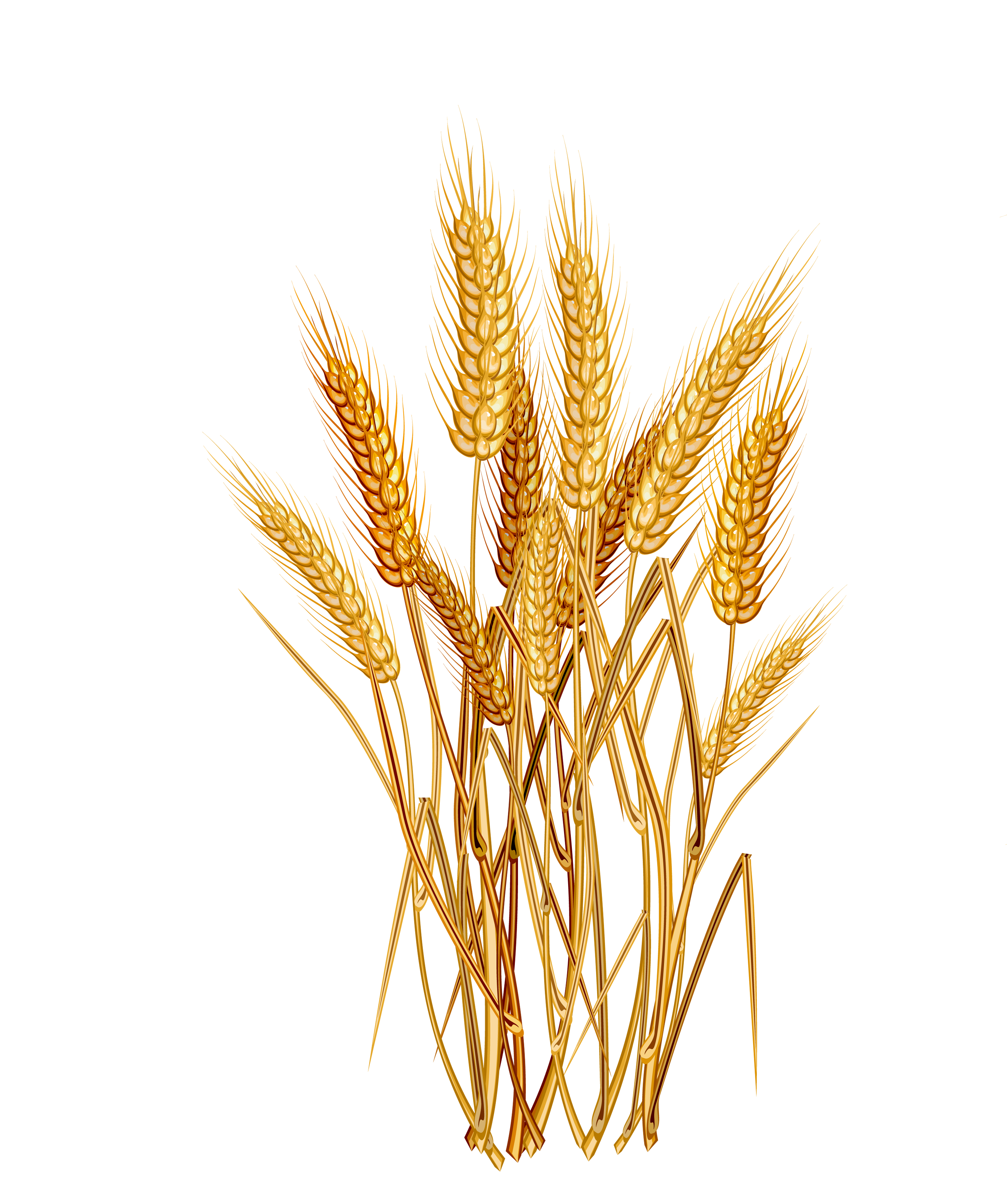 Png image purepng free. Wheat clipart wheat stem