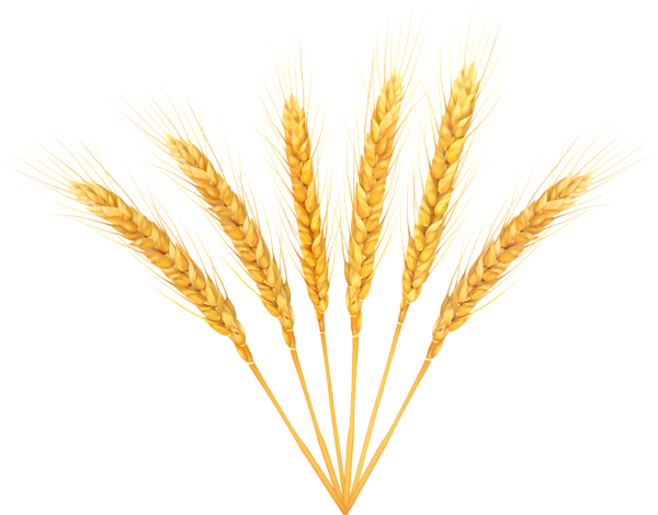Png images free download. Wheat clipart transparent background