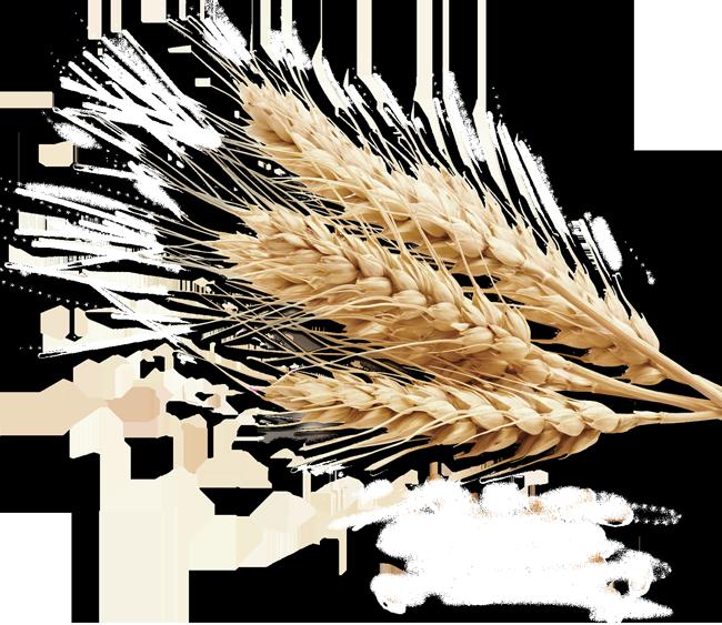 grains clipart transparent background wheat
