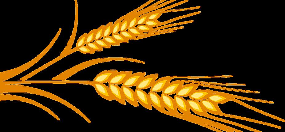 Transparent free on dumielauxepices. Grains clipart grain truck