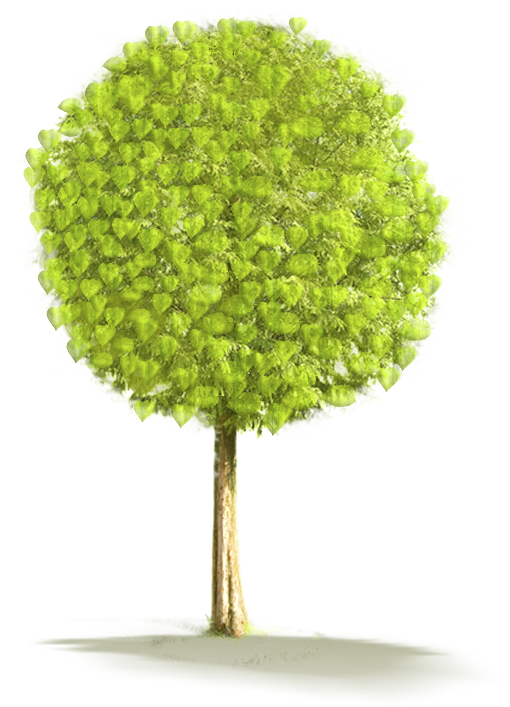 Grain clipart tree. Large png gallery yopriceville