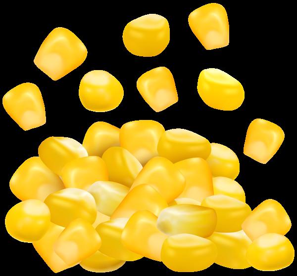 Sweet corn grains png. Grain clipart unprocessed