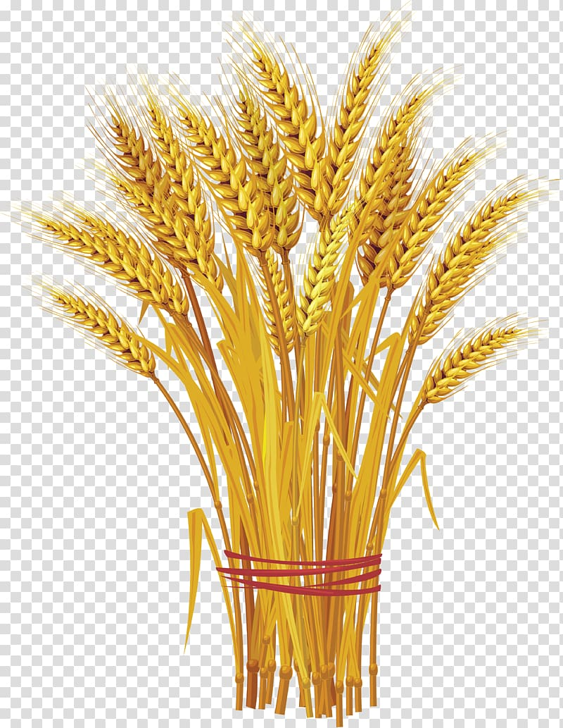 Brown grains illustration like. Wheat clipart wheat bunch