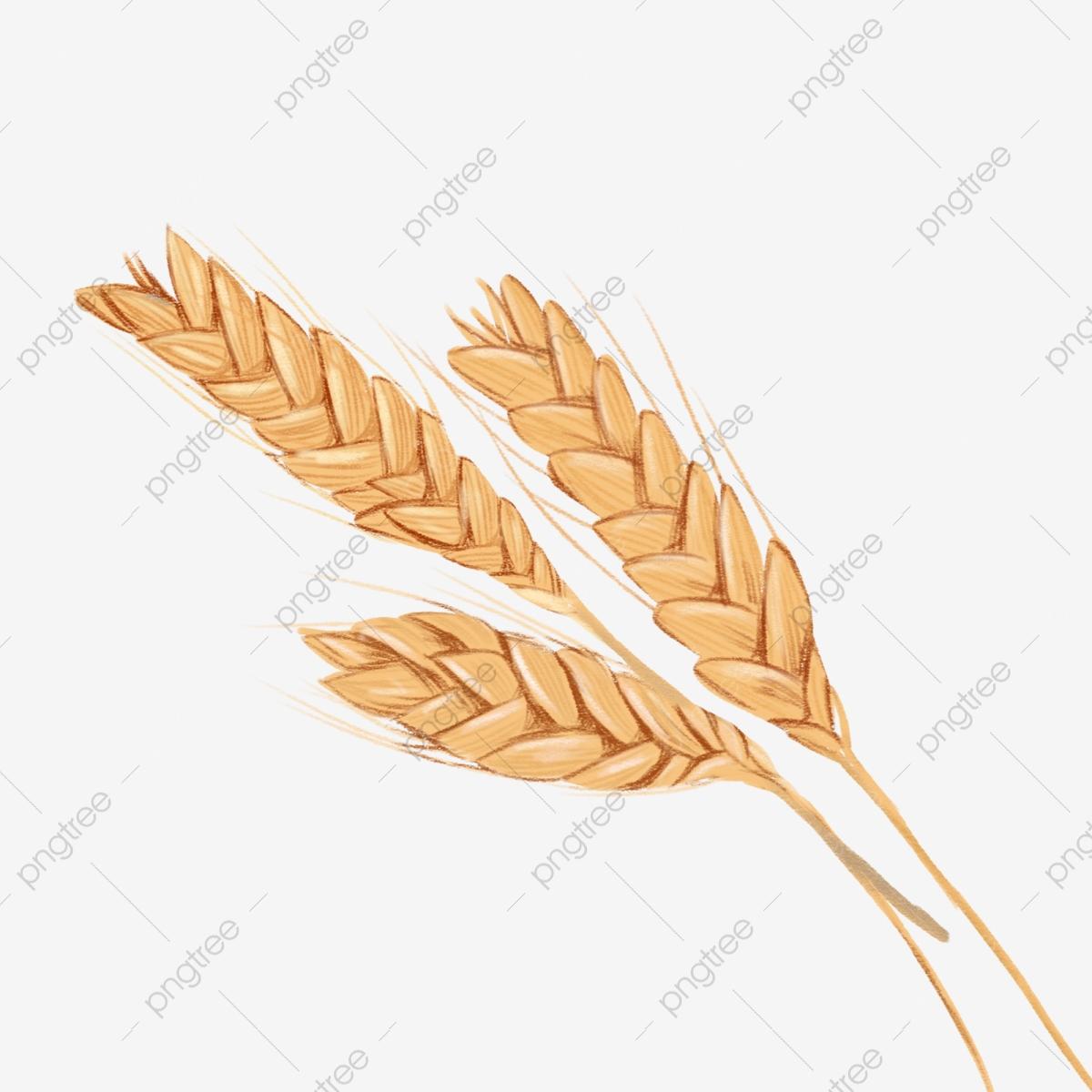 wheat clipart wheat bunch