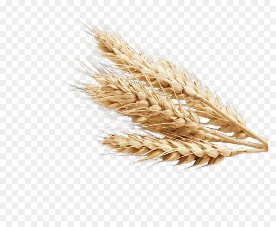 Cartoon transparent clip art. Wheat clipart ear wheat