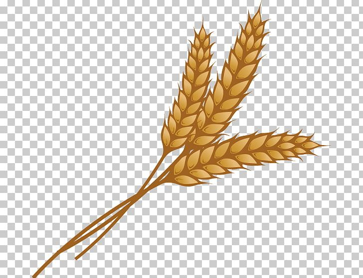 Ear png cereal germ. Wheat clipart grain