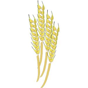 Wheat clipart wheat crop. Free grain farming download