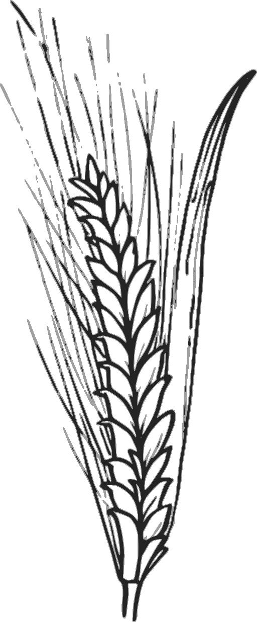 Clip art outline vector. Grains clipart wheat stalk