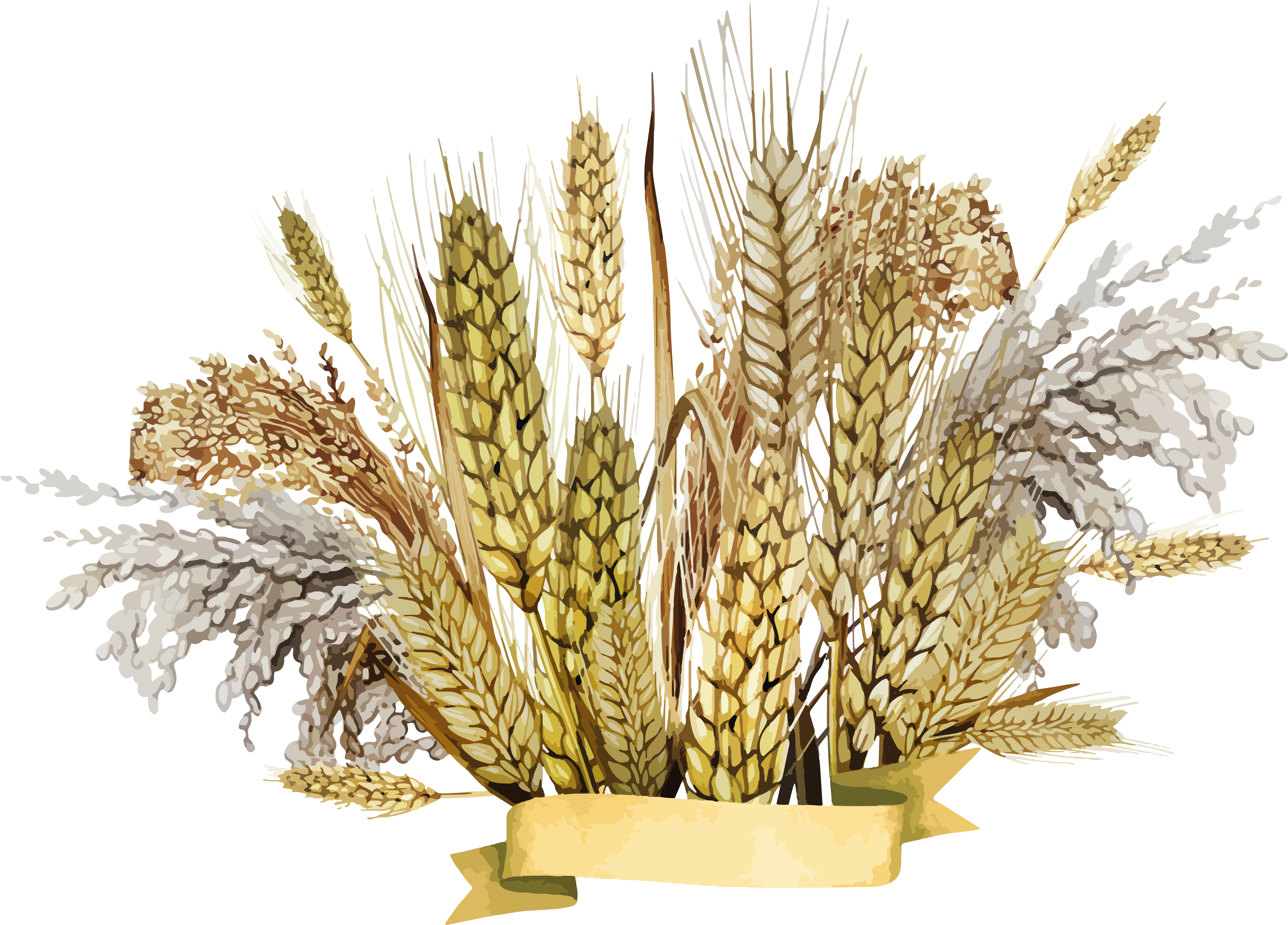 Wheat clipart barley. Png images free download