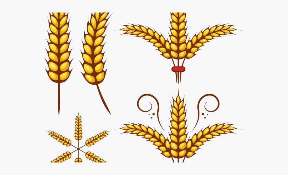 Grains leaf draw in. Wheat clipart wheat stem