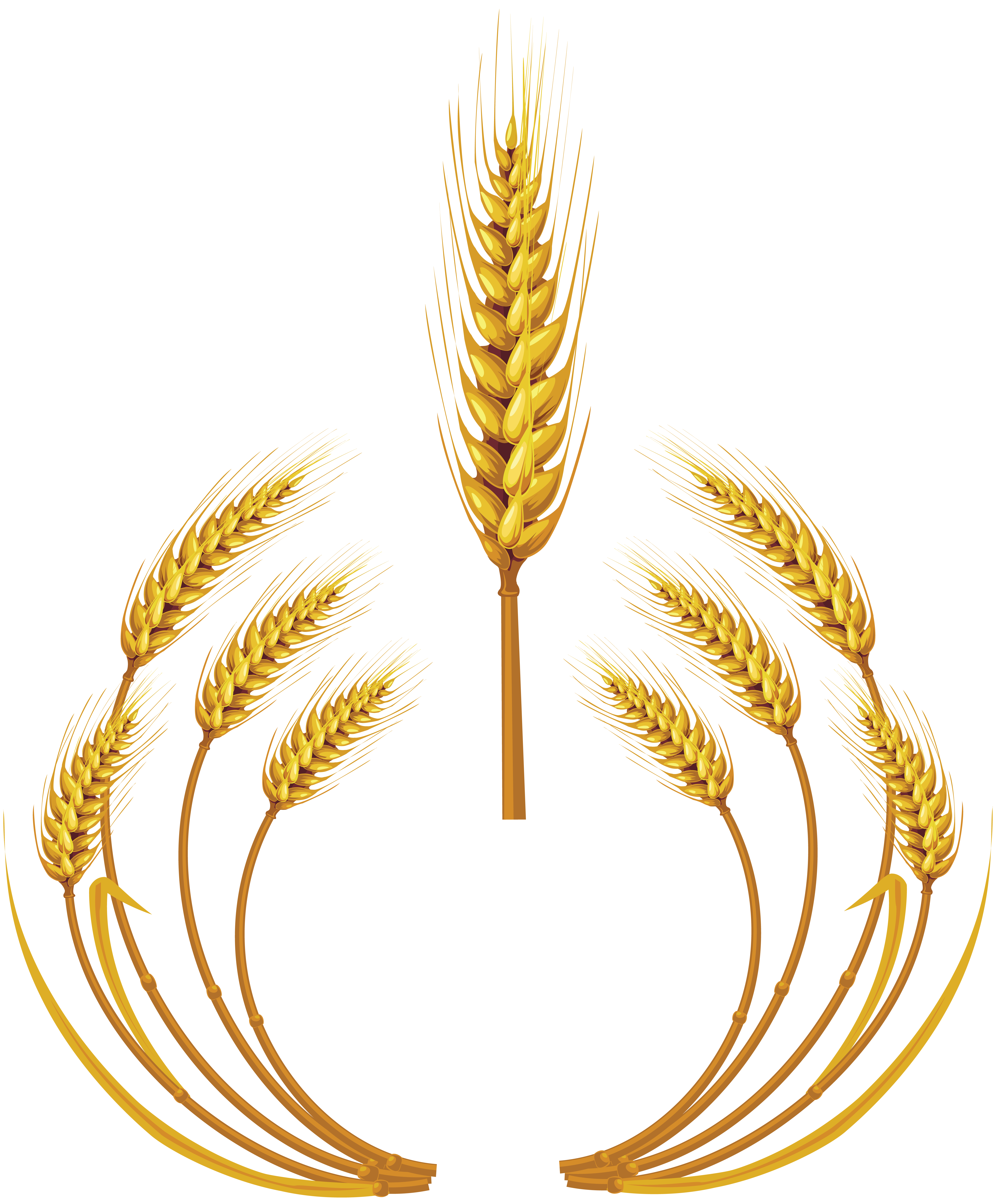 Grains clipart wheat seed. Png image purepng free