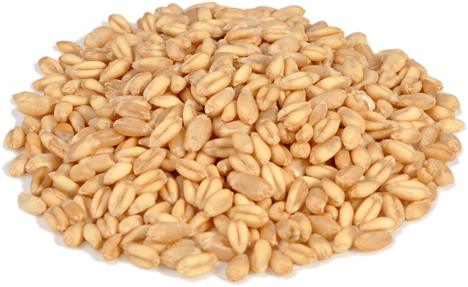 Png image purepng free. Grain clipart wheat seed