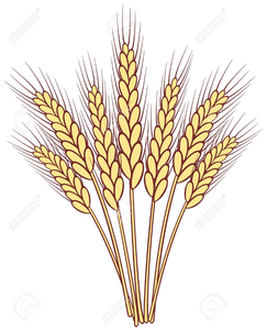 Free grains download clip. Wheat clipart wheat stalk
