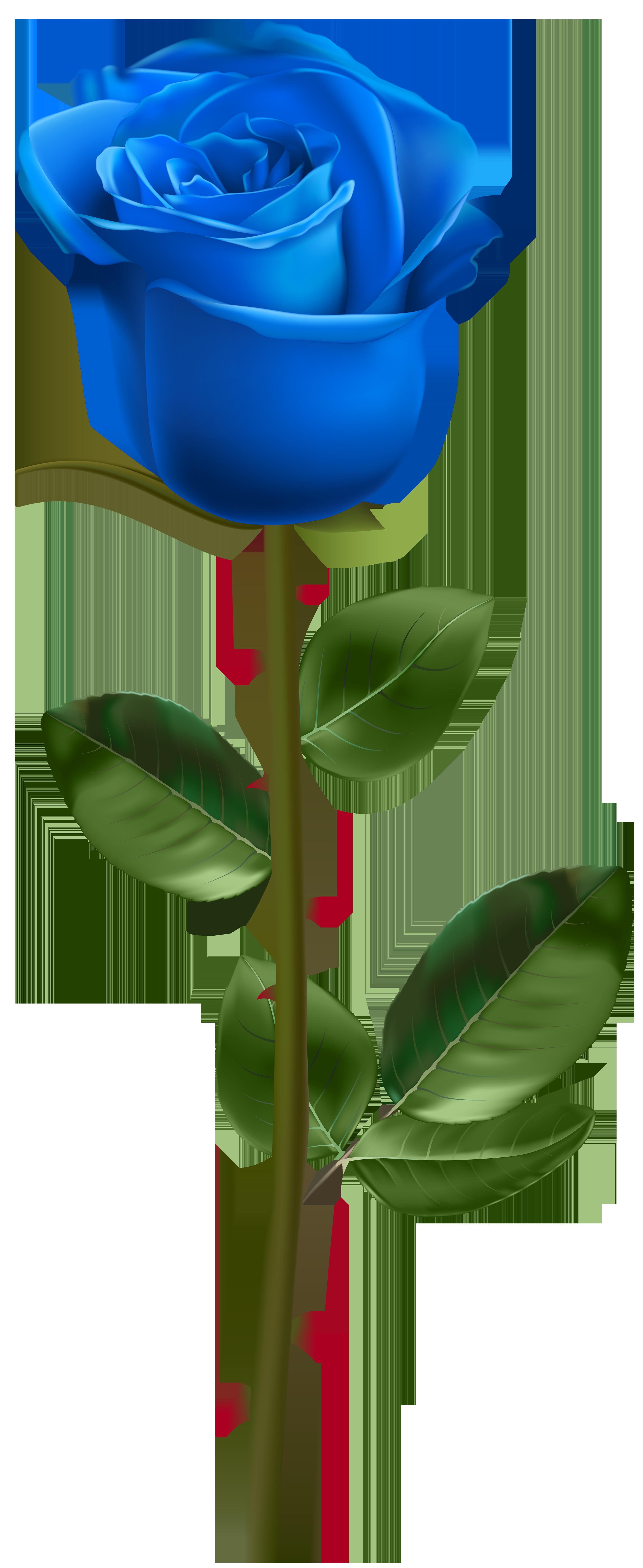 Grains clipart wheat stem. Blue rose with transparent