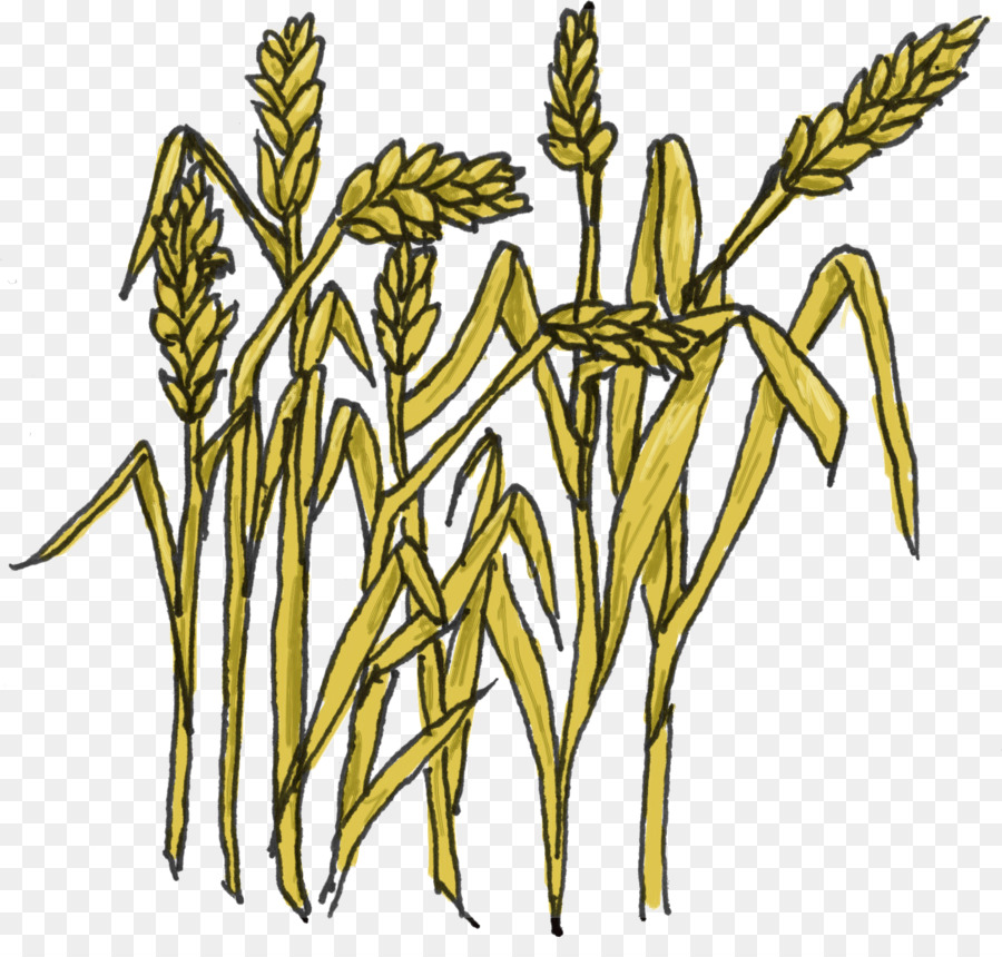 Flower png download free. Grains clipart wheat stem