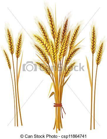 Pin on tattoo . Wheat clipart wheat spike