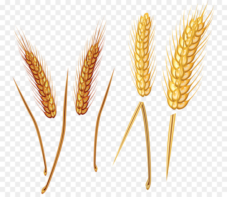 Grain clipart wheat straw. Background png download free