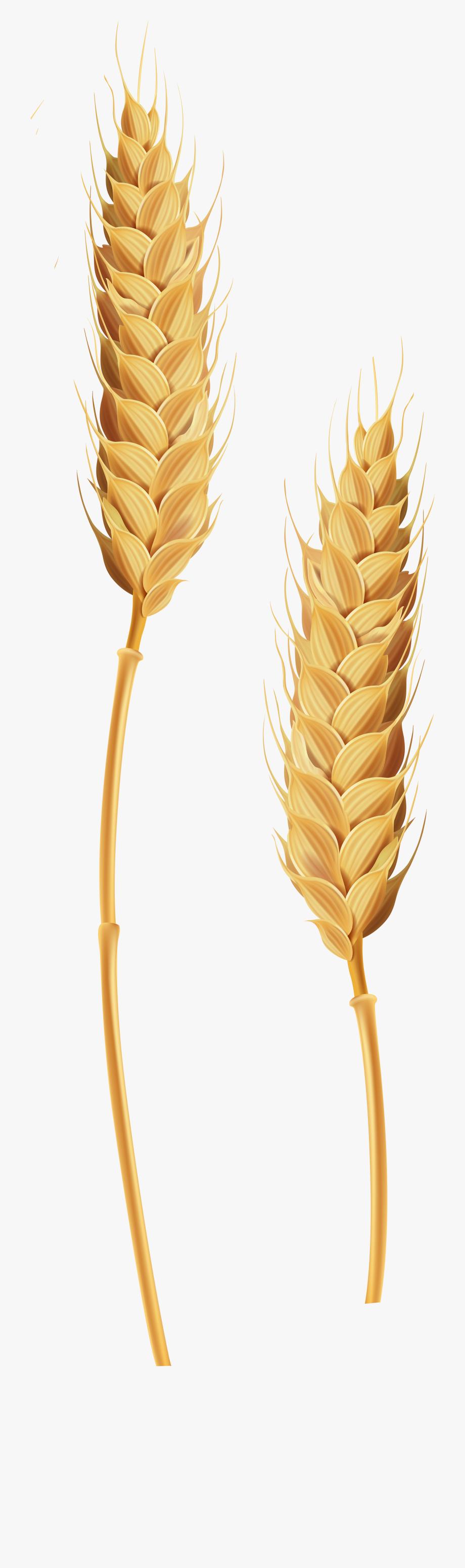 Stalks transparent clip art. Wheat clipart wheat stem