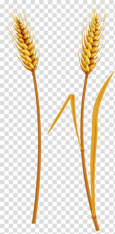 Wheat clipart wheat straw. Harvest transparent background png