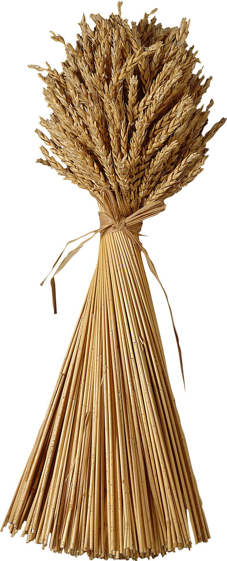 Grain clipart wheat straw. Png images free download