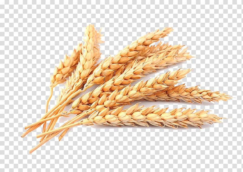 Brown cereal transparent . Wheat clipart wheat straw