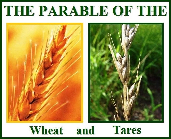 Parable of the and. Wheat clipart wheat tares
