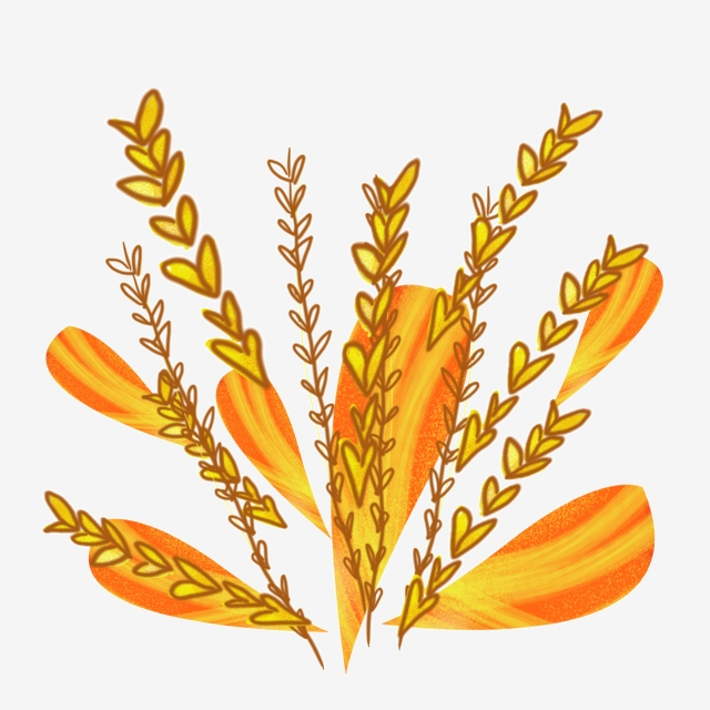 Illustration food . Grain clipart yellow wheat