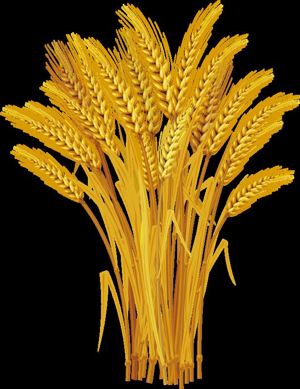 Wheat clipart ear wheat. Royalty free clip art