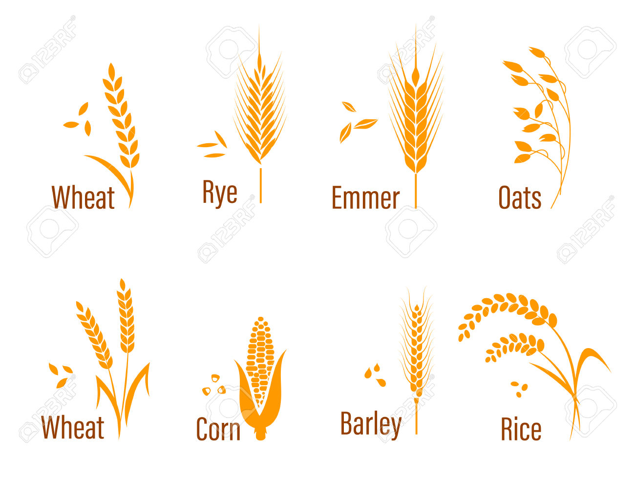 Oats free on dumielauxepices. Grains clipart