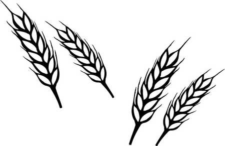 Wheat border free download. Grains clipart curved