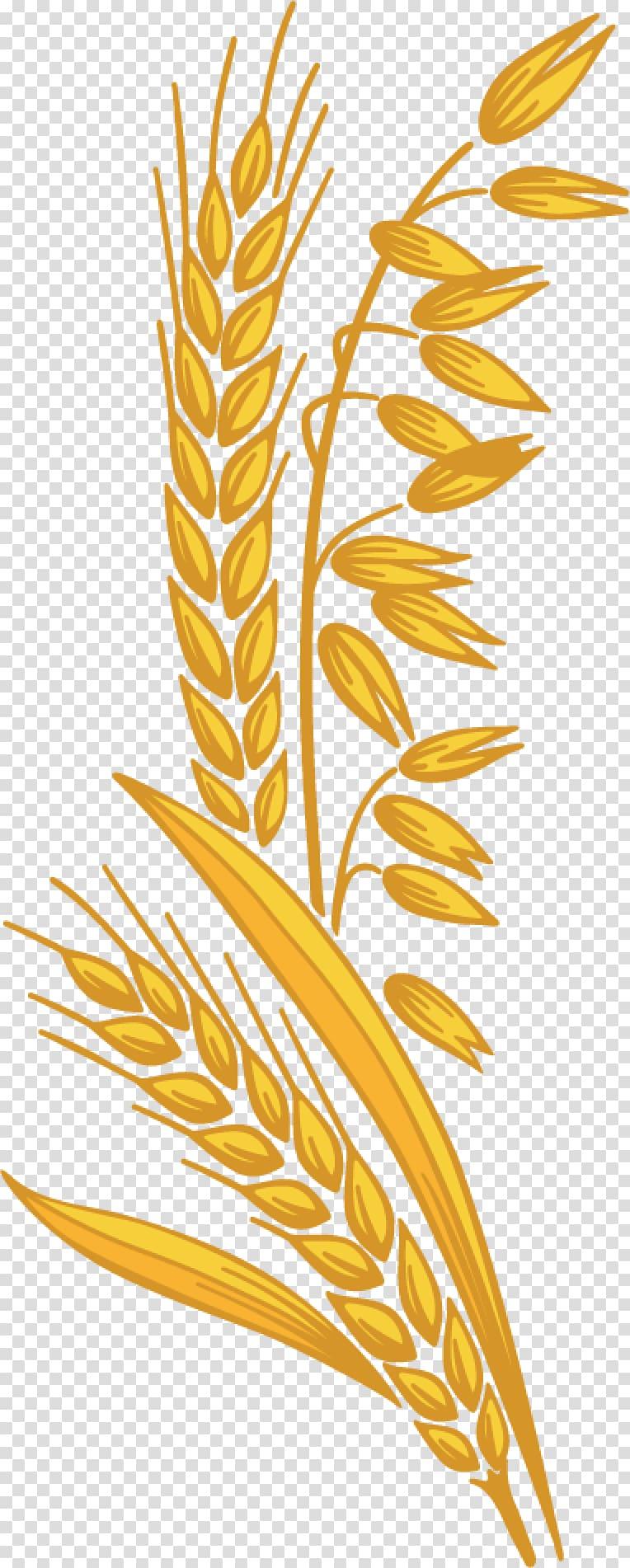 Dietary fiber cereal germ. Oatmeal clipart grain