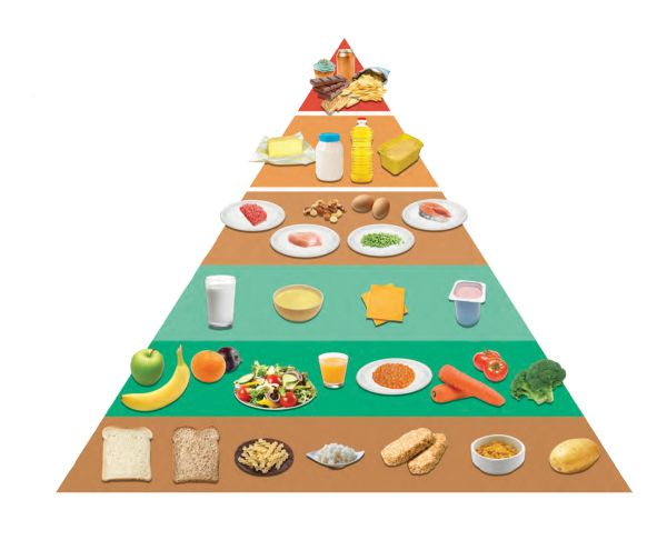 The new steps to. Grains clipart food pyramid