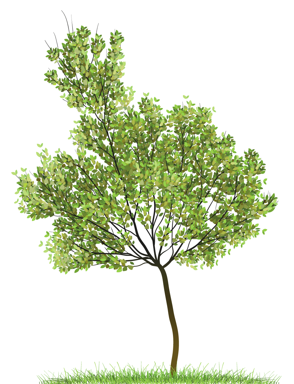 Transparent green png gallery. Grains clipart tree